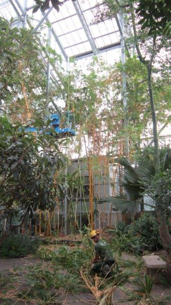 Bamboo 2013 (10)