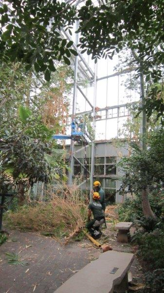 Bamboo 2013 (12)