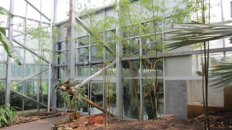 Bamboo 2013 (55)