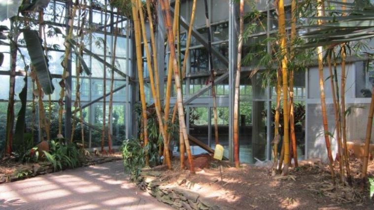 Bamboo 2013 (64)