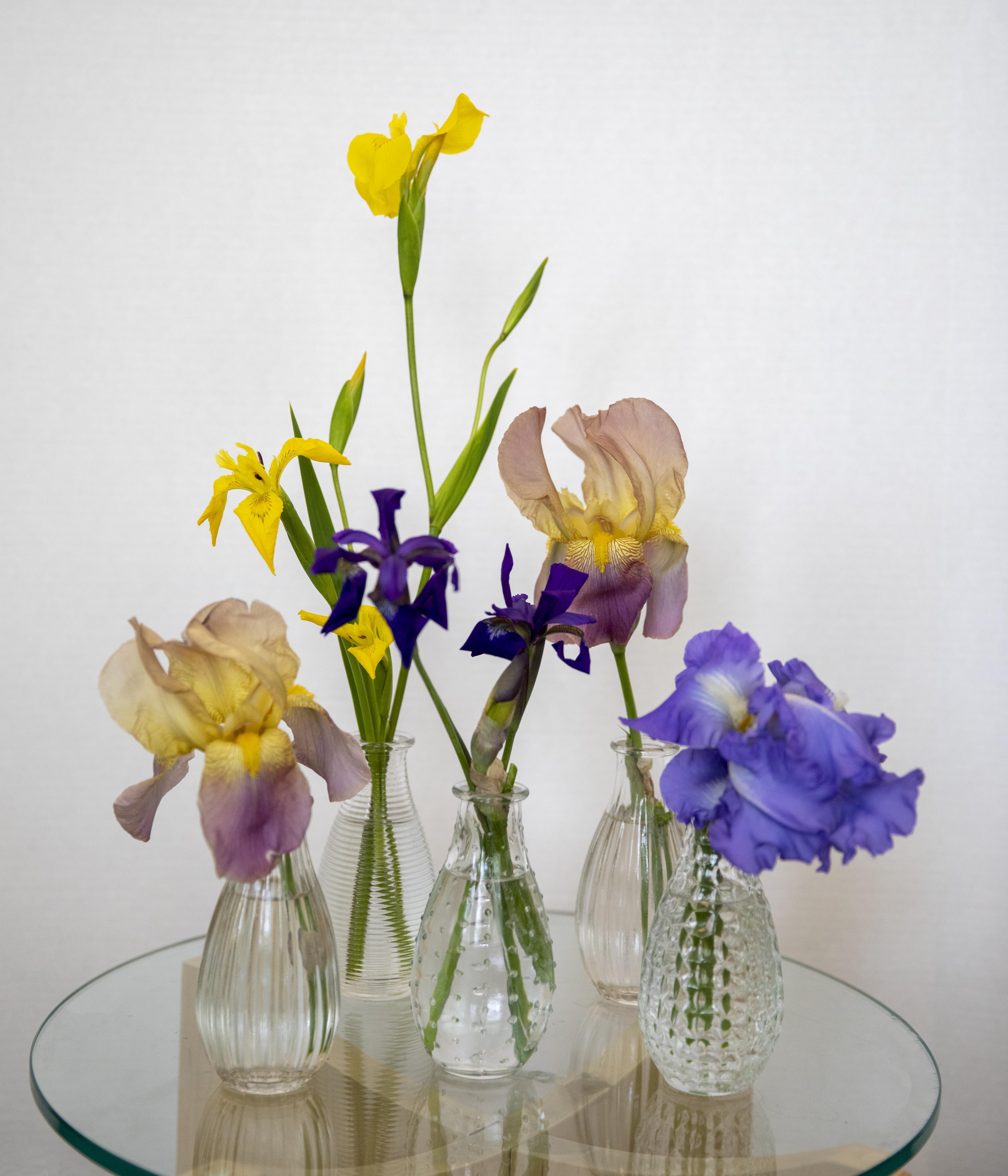 Iris 5 vases